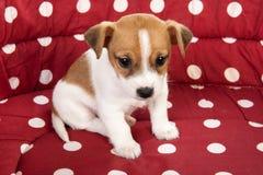 Rood bevlekt huisdierenbed met weinig puppy royalty-vrije stock fotografie