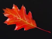 Rood blad stock afbeeldingen