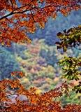 Rood blad in de herfst in China Stock Afbeeldingen