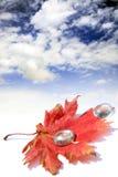 Rood blad en weinig glas waterdrops Stock Foto's