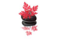 Rood blad en zwarte steen Stock Fotografie
