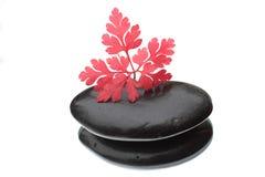 Rood blad en zwarte steen Royalty-vrije Stock Foto