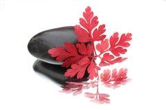 Rood blad en zwarte steen Royalty-vrije Stock Afbeelding