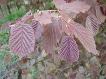 Rood blad op een groene achtergrond Stock Foto