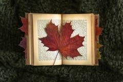 Rood blad op oud boek stock afbeeldingen