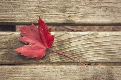 Rood blad op parkbank in de herfst stock afbeeldingen