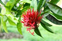 Rood bloem blauwer groen blad als achtergrond royalty-vrije stock afbeeldingen