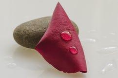 Rood bloemblaadje met waterdrops Stock Afbeelding