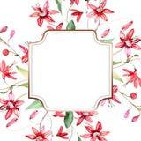 Rood bloemen botanisch bloemenboeket Waterverf achtergrondillustratiereeks Het ornamentvierkant van de kadergrens royalty-vrije stock foto