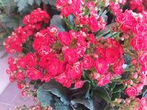 Rood bloemenboeket stock afbeelding
