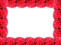 Rood bloemframe stock foto
