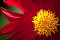 Rood bloemgewas over groene achtergrond selectieve die nadrukmacro met ondiepe DOF wordt geschoten stock foto's