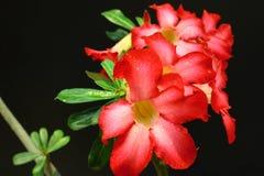 Rood boeket in uw tuin Stock Fotografie