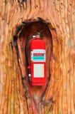 Rood brandblusapparaat in de boom royalty-vrije stock fotografie