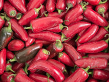 Rood Chili Peppers Stock Foto