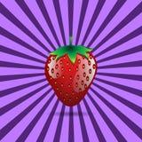 Rood de contour abstract naadloos patroon van het aardbeifruit op purpere achtergrond Royalty-vrije Stock Fotografie