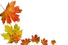 Rood de herfstblad Stock Foto's