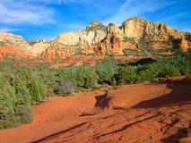 Rood de Rotslandschap van Sedonaarizona Royalty-vrije Stock Foto