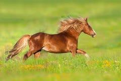 Rood die paard in bloemen in werking wordt gesteld stock afbeeldingen