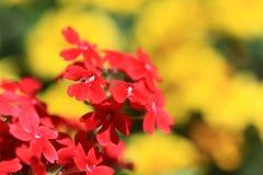 Rood en geel stock foto