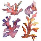 Rood en geel aquatisch onderwateraardkoraalrif Van de achtergrond waterverf reeks Het geïsoleerde element van de koraalillustrati stock illustratie