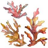 Rood en geel aquatisch onderwateraardkoraalrif Van de achtergrond waterverf reeks Het geïsoleerde element van de koraalillustrati stock afbeeldingen