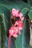 Rood en groen stock afbeeldingen
