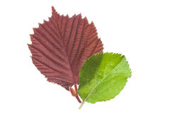 Rood en groen blad Stock Afbeeldingen