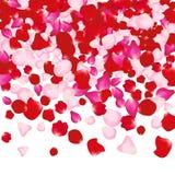 Rood en roze nam bloemblaadjes op wit toe De achtergrond van de valentijnskaart De vrouwenconcept van de schoonheidsmanier Stock Fotografie