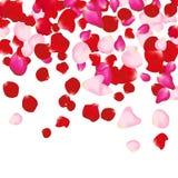 Rood en roze nam bloemblaadjes op wit toe De achtergrond van de valentijnskaart De vrouwenconcept van de schoonheidsmanier Stock Foto