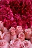 Rood en Roze nam in Tuin toe Royalty-vrije Stock Foto