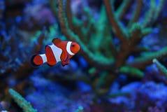 Rood en wit Stock Afbeelding