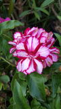 Rood en wit weinig bloem royalty-vrije stock fotografie