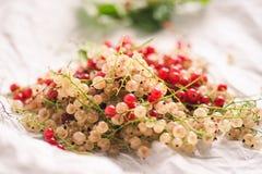 Rood en witte aalbessen op een Witboek Stock Foto's