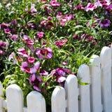 Rood-en-witte bloemen Royalty-vrije Stock Foto's