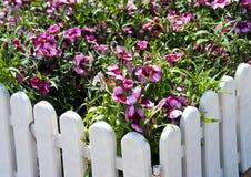 Rood-en-witte bloemen Stock Foto's
