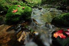 Rood esdoornblad en mos Royalty-vrije Stock Afbeeldingen