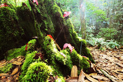 Rood esdoornblad en mos Royalty-vrije Stock Afbeelding