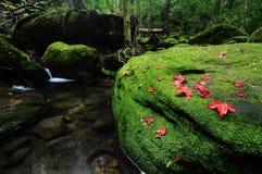 Rood esdoornblad en mos Stock Afbeeldingen