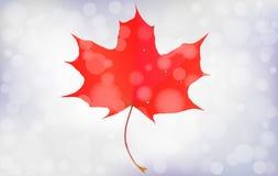 Rood esdoornblad met bokeh onscherpe achtergrond Het seizoen van de herfst Weg in dalingsbos Vector illustratie eps10 Royalty-vrije Stock Foto's