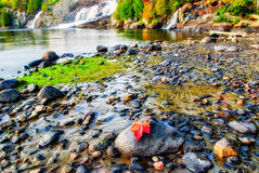Rood Esdoornblad met Watervallenachtergrond Royalty-vrije Stock Afbeeldingen