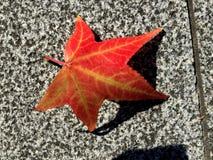 Rood esdoornblad op Flor royalty-vrije stock foto