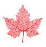Rood esdoornblad Symbool van Canada De herfst Vector illustratie Royalty-vrije Stock Fotografie