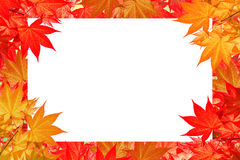 Rood esdoornverlof van de Kleurrijke herfst met ruimte voor tekst of symbool Stock Foto's