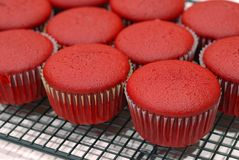 Rood Fluweel Cupcakes Stock Foto's