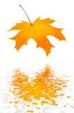 Rood-geel de herfstblad. Royalty-vrije Stock Foto's