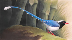 Rood-gefactureerde Blauwe Ekster (Urocissa-erythrorhyncha) op bemoste login een bamboebos Royalty-vrije Stock Foto's