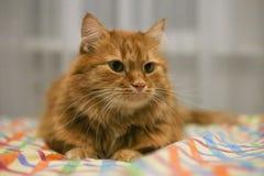 Rood geleid kattenhorloge ergens stock foto's