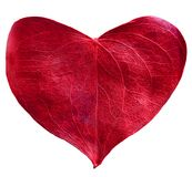 Rood gevormd bladhart royalty-vrije stock fotografie
