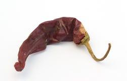 Rood Guajillo annuum Spaanse peperscapsicum Royalty-vrije Stock Afbeeldingen